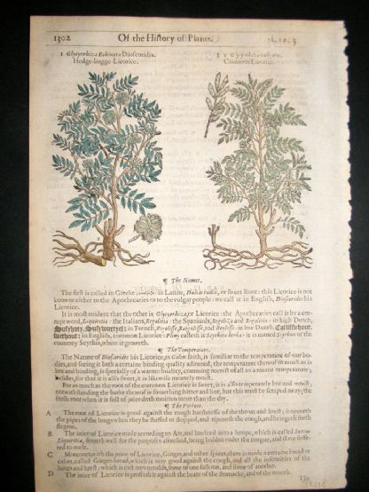 Gerards Herbal 1633 Hand Col Botanical Print. Liquorice | Albion Prints